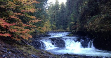Is There Hope for Wild Salmonids in the City?