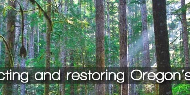 Oregon Wild - Protecting and Restoring Oregon's Forests