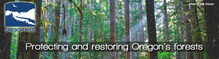 Forest-Email-Banner